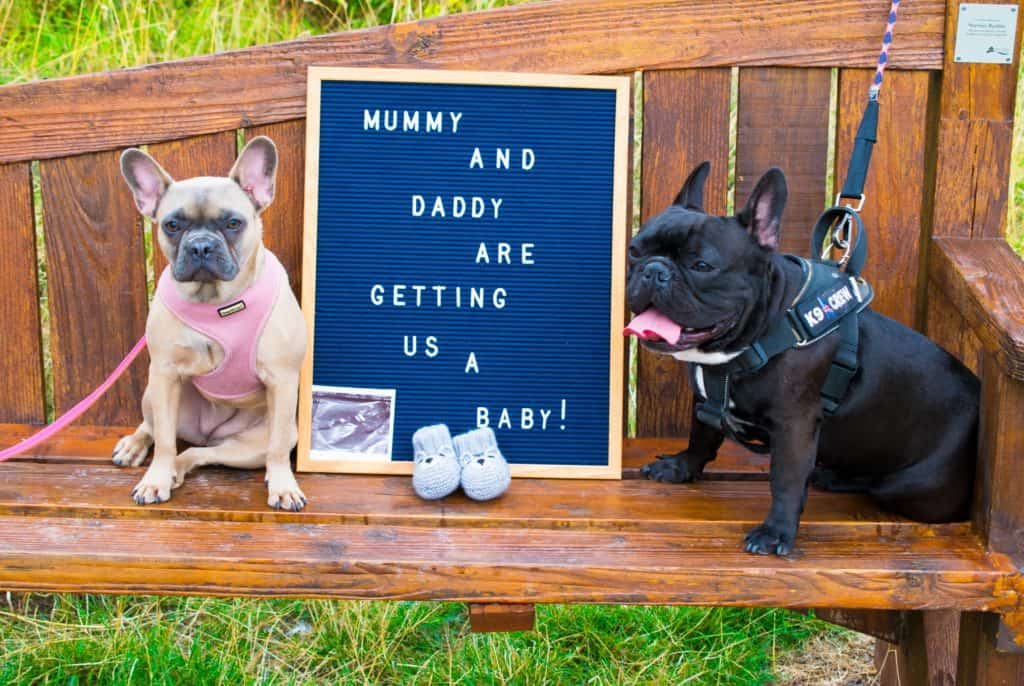 pregnancy announcement - pregnancy - mummy blog